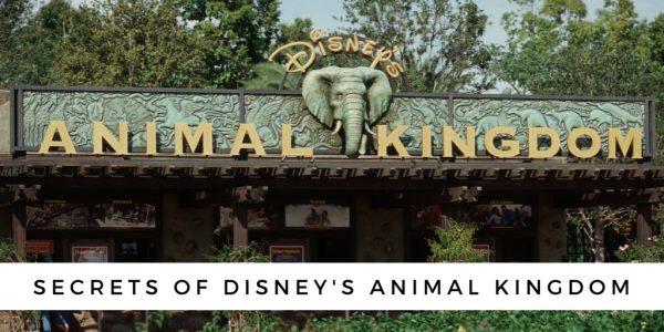Secrets Animal Kingdom