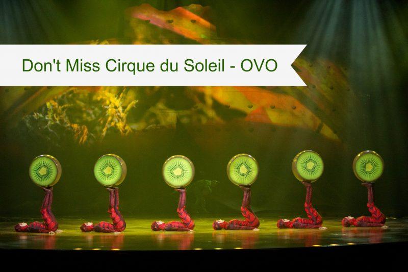 Cirque Du Soleil Myrtle Beach