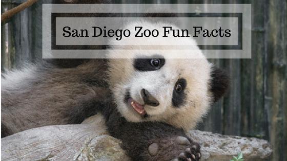 fun facts san diego zoo