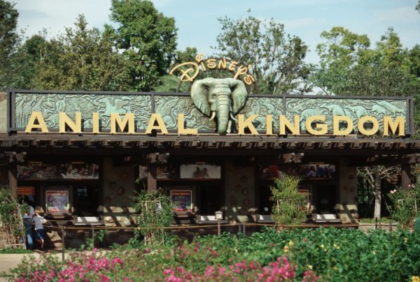 things at animal kingdom