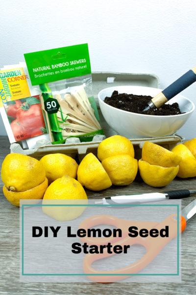 diy lemon seed starter